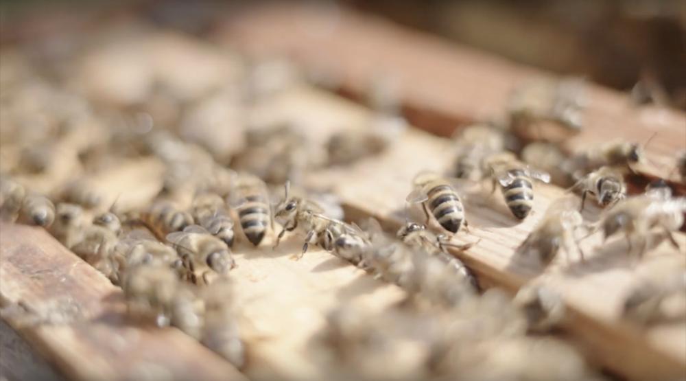Gleisgold - Honey made by Deutsche Bahn