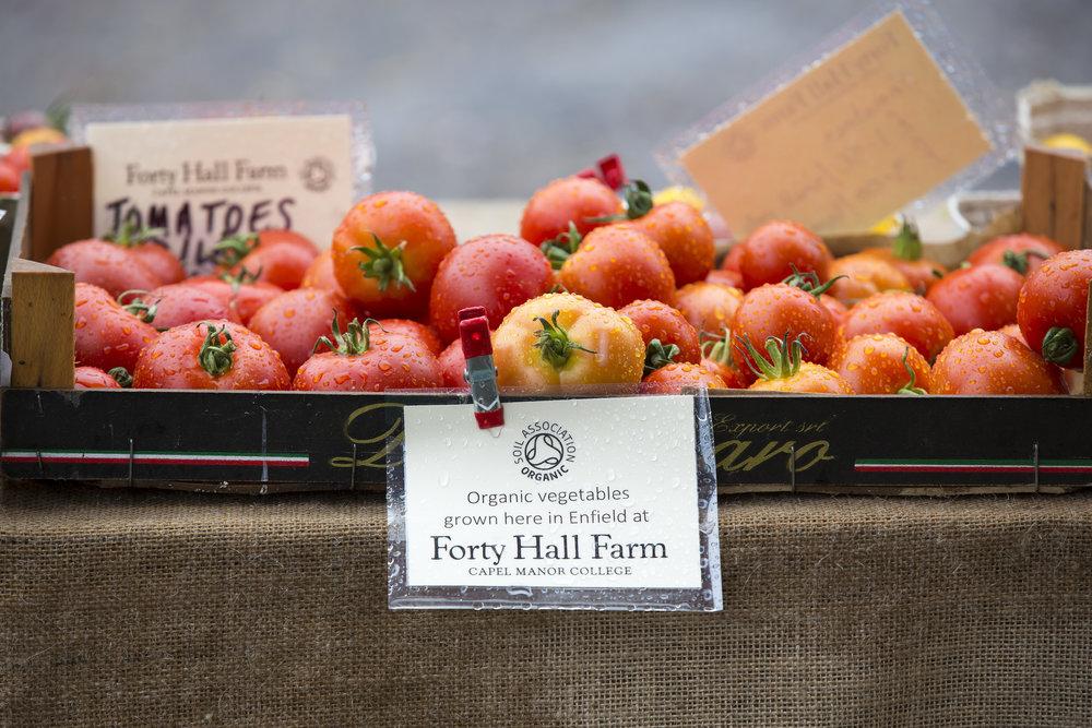tomatoes8.JPG