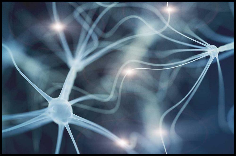 Brain Neurological Activity