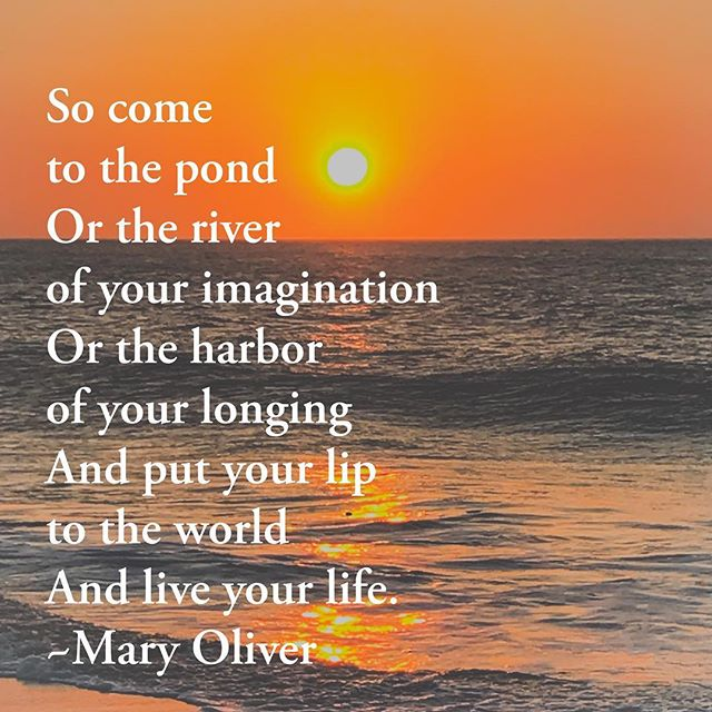 One of our favorite poets whose words make the heart move and the spirit fly. Thank you for your gift Mary Oliver. #maryoliver #maryoliverpoetry #sissyandco #sissyandcodesigns #rip #poet #signs #woodsigns #design #handcrafted #wood #gift #shopfrederick #shoplocal #smallbusiness #womeninbusiness #frederickmd #frederickmd #downtownfrederick