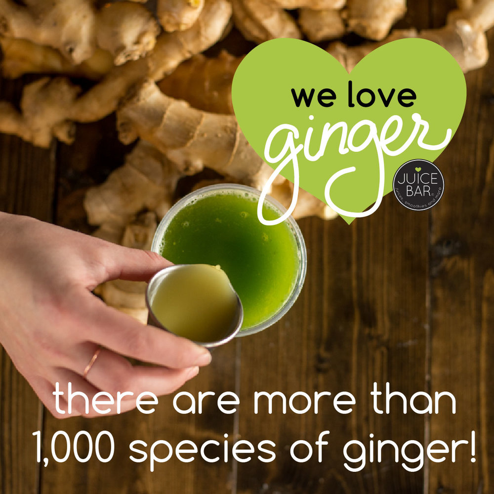 ginger fun facts-06.jpg