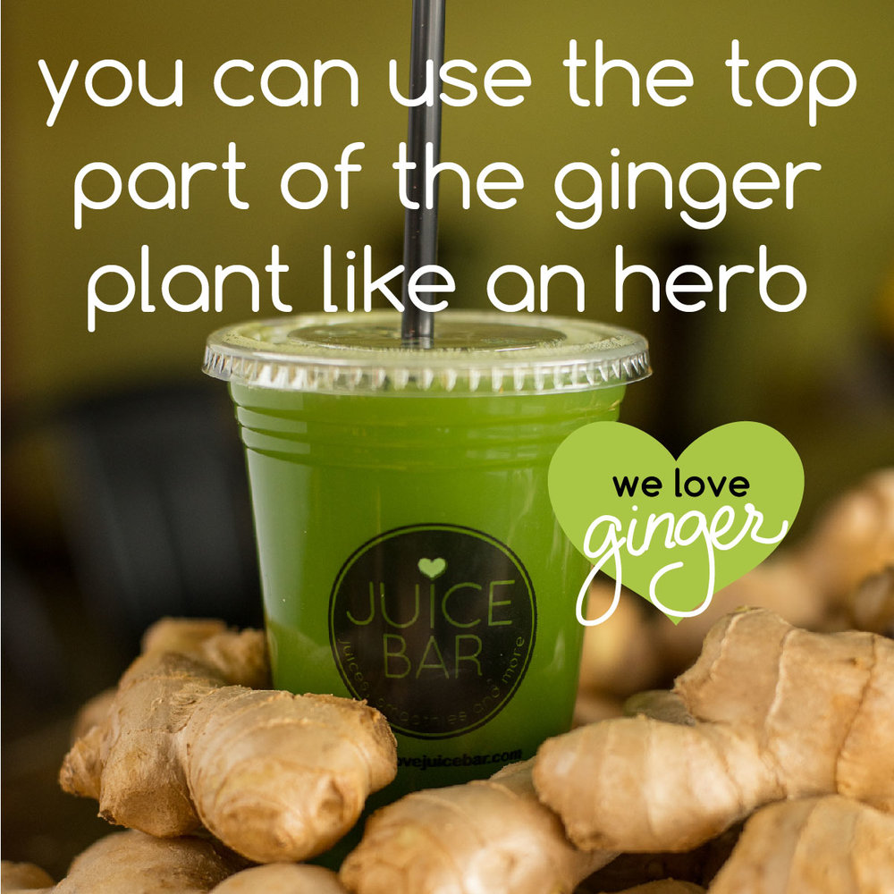 ginger fun facts-05.jpg