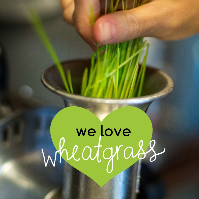 We love wheatgrass!
