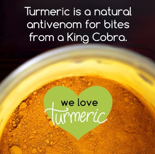 turmeric fun facts-05.jpg