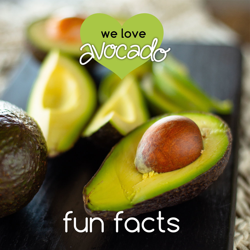 _fun facts_AVOCADO_02.jpg