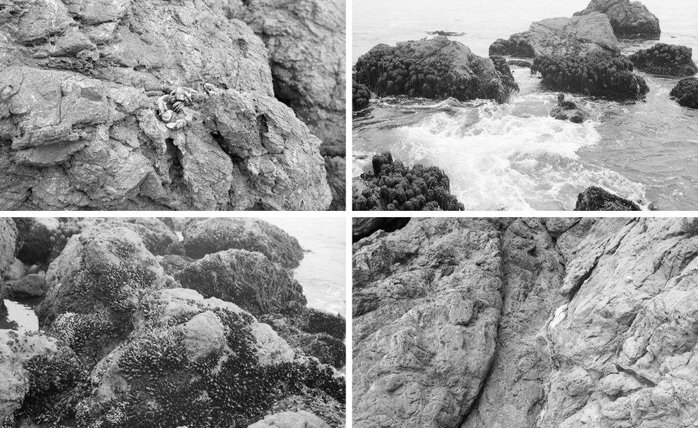 coastal textures, California Coast August 2013