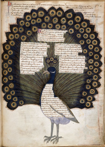 Medievalpeacock