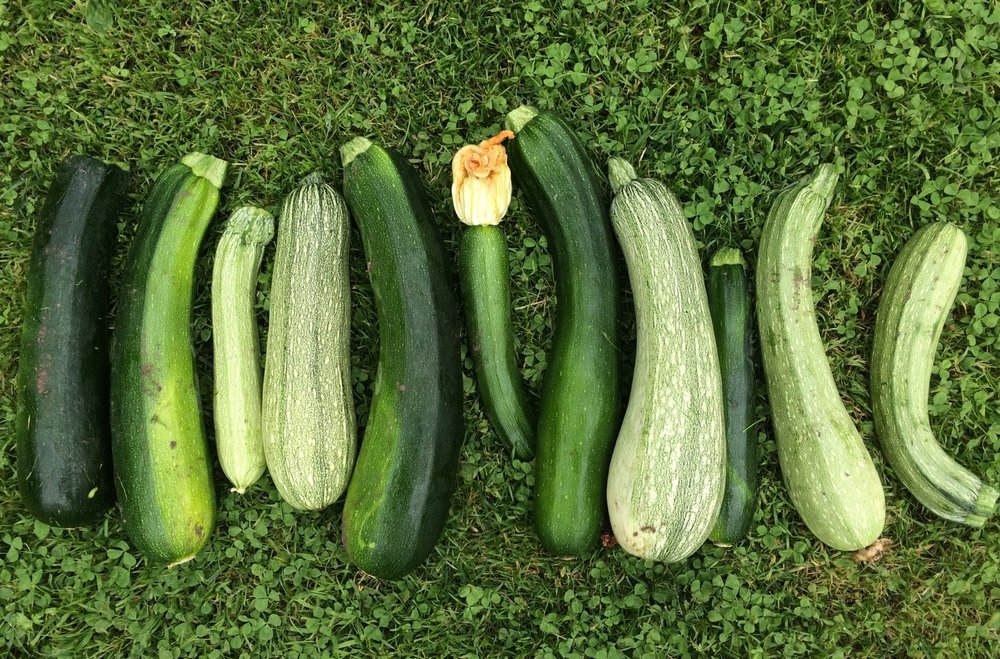 Organic courgette's straight from the garden