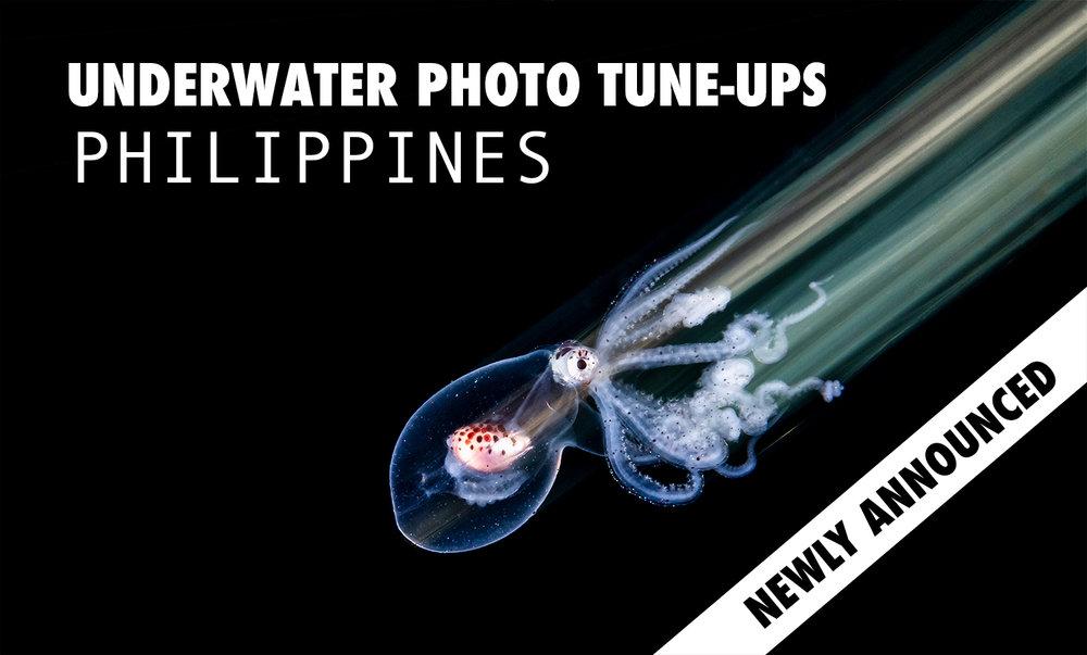 Tune_Up_Website.jpg