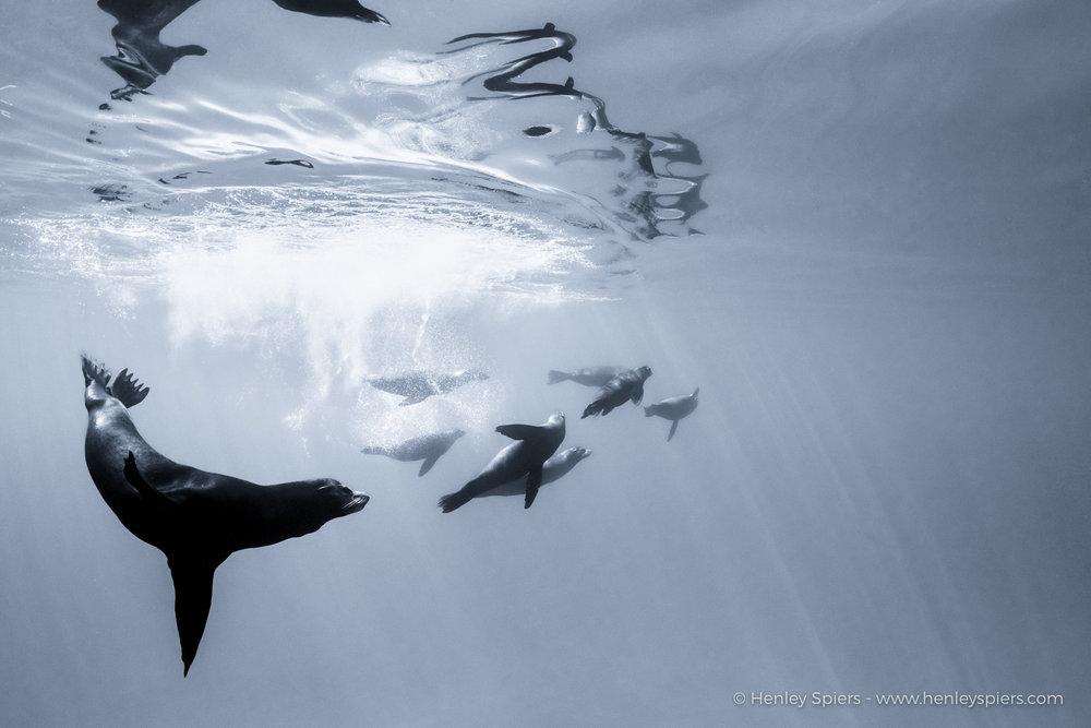 Plank_Sea_Lions.jpg