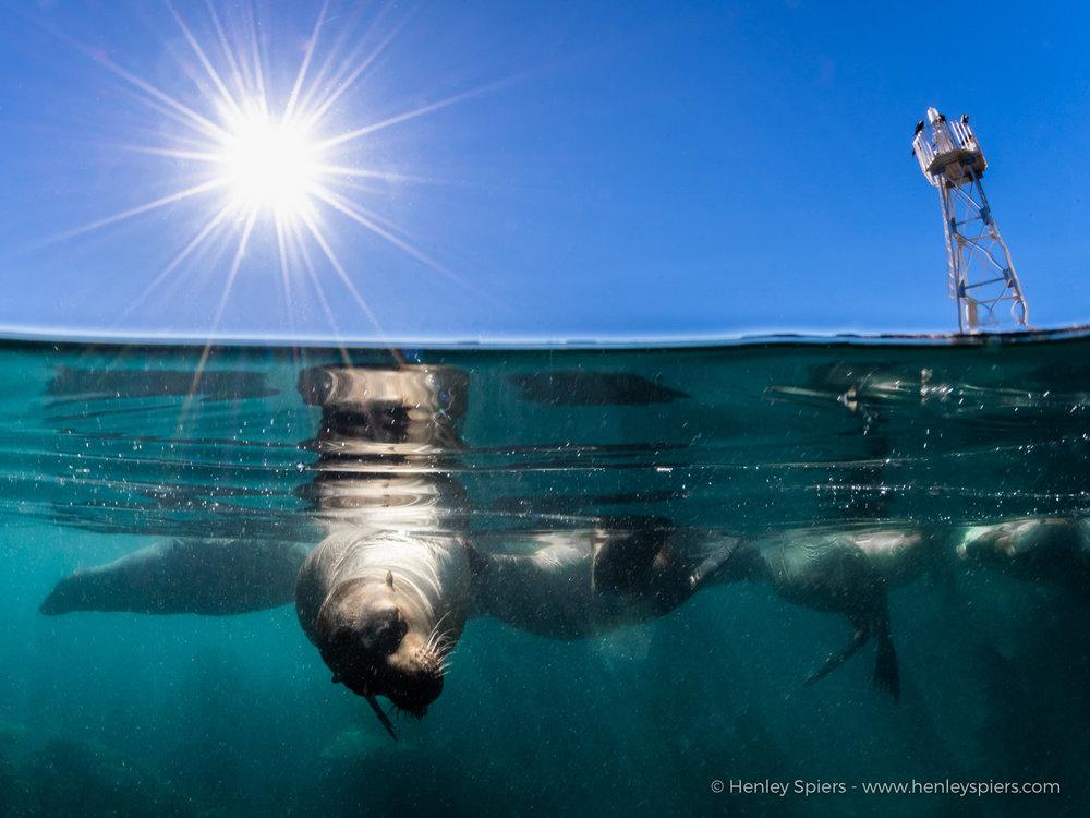 Sea_Lion_Over_Under.jpg