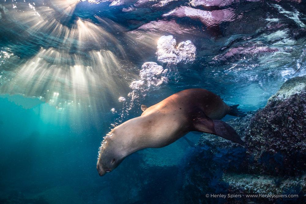 Sea_Lion_Sunset.jpg