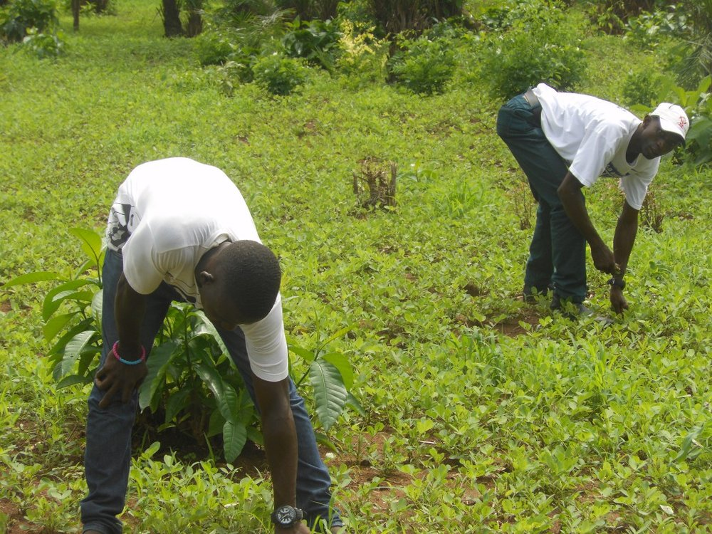 Right: As part of our agriculture solutions, farmers now use inexpensive weed control practices that employ little or no chemical fertilizers and pesticides