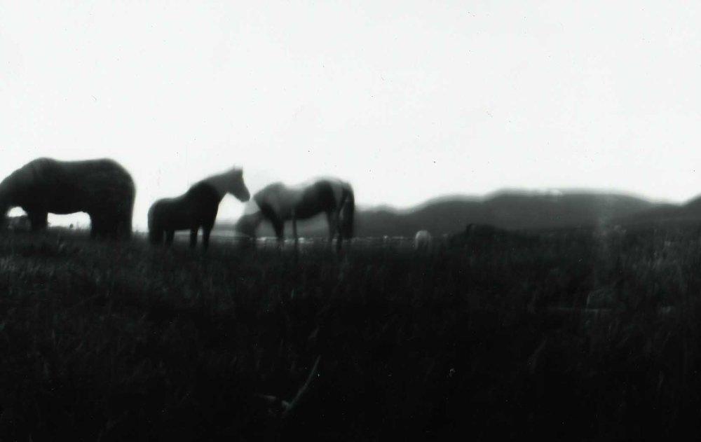 Horses, Judy Thomas,2013.