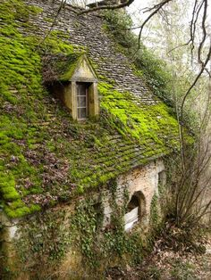 Removing And Preventing Moss Growth On Your Roof | Leak Seal Roofing, Inc.