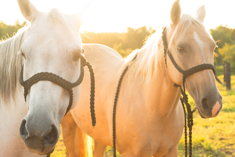 Meet Roxy and Weaver, our talented Rodeo Queens   { Photography:  Garrett Newsom Photography}