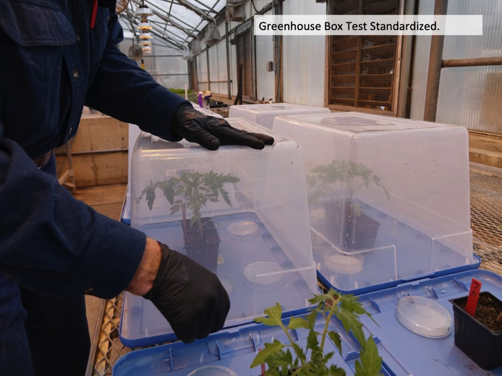 Bioassay plants were placed in a box along with tank mix solutions that were being tested. Box were sealed for 48 hours. Plant were removed and allowed to grow. Epinasty rating 0-10 were used as the evaluation method. -