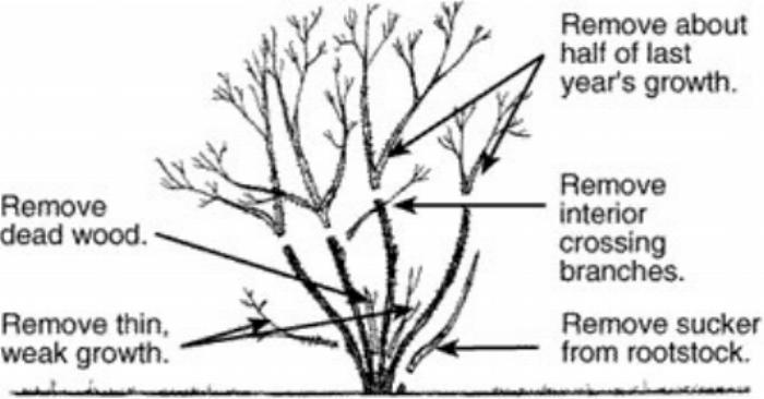 pruningDiagram.jpg