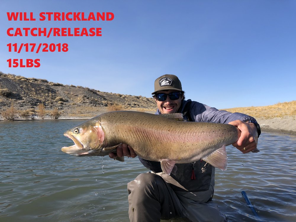 WILL STRICKLAND 11-17-18.jpg