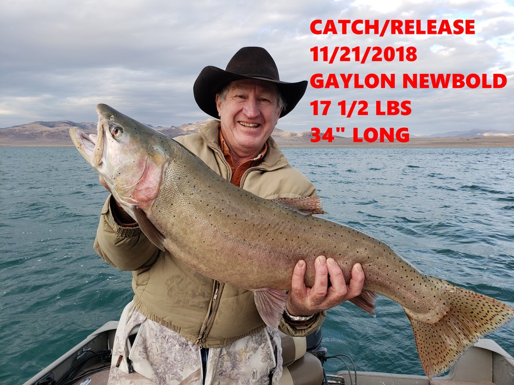GAYLON NEWBOLD 11-21-18.jpg