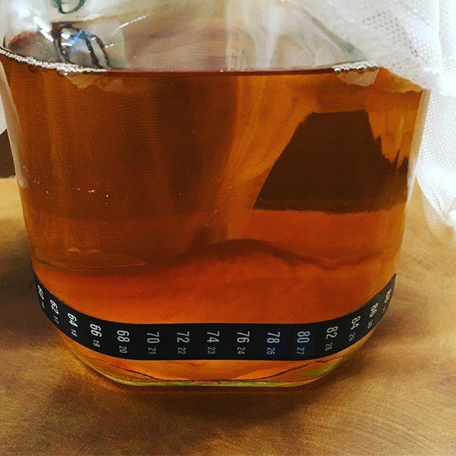 #kombucha batch 1 / day 1 #buckscounty #fermentation #buckscountypa #🍞#🍵
