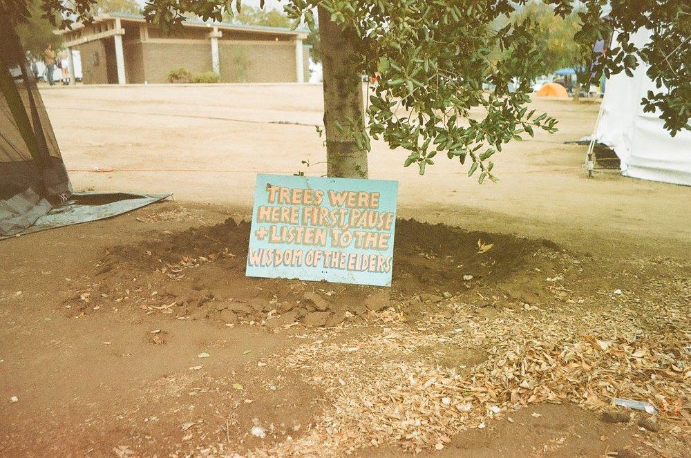trees sign.jpg