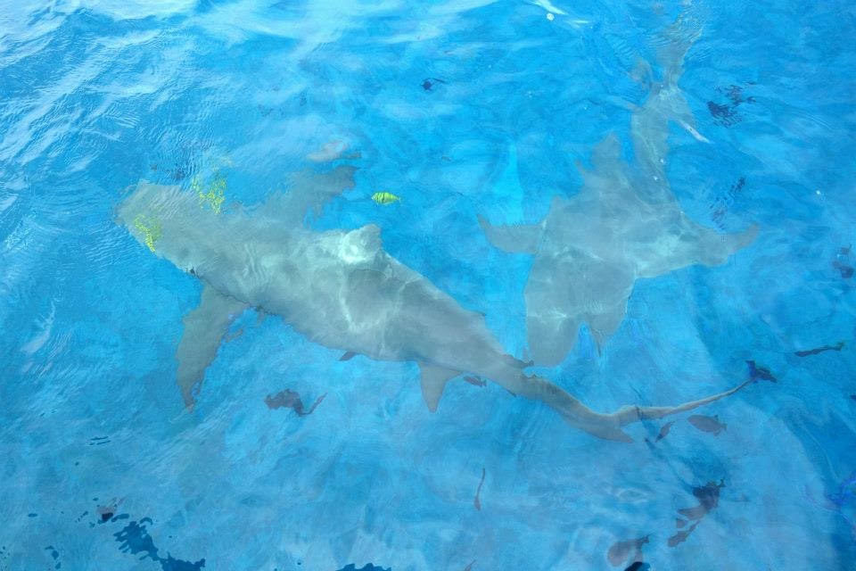 Butler Bora Bora Sharks-5