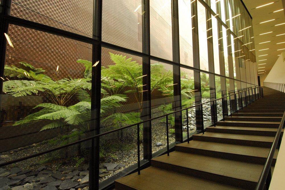 fern garden _DSC1035.jpg