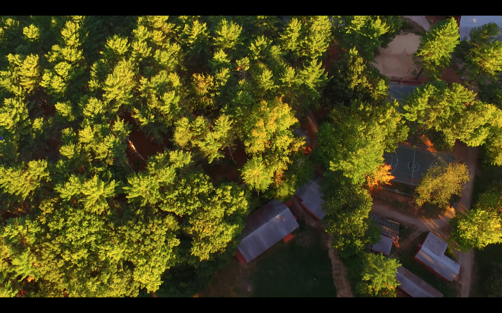 sunrise senior treetops.png