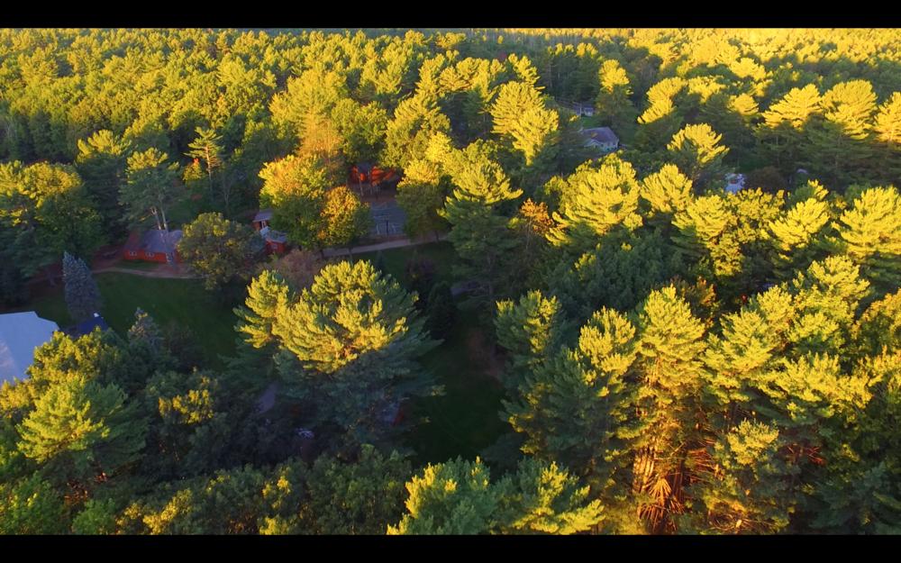 sunrise tree tops.png