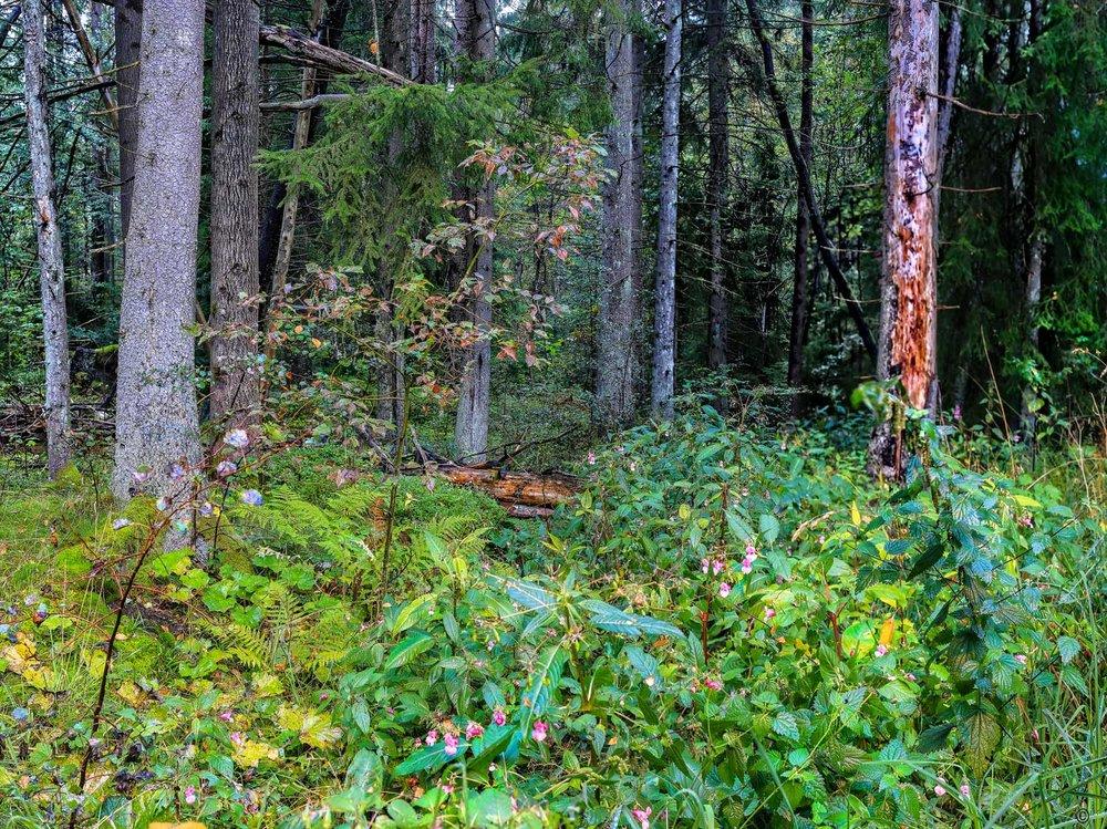 Naturreservatet Tredalen