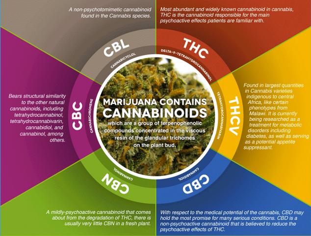 marijuanas-cannabinoids-from-THC-to-CBD.png