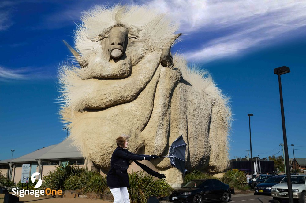 The Very Windy Merino   Our Big Merino caused quite a stir this month. Reaching over 10,000 people virally. Lots of thumbs up this month! Anyone got a brush?