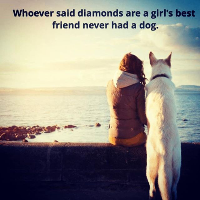 happy #internationalwomensday ! From all the #dogsofinstagram