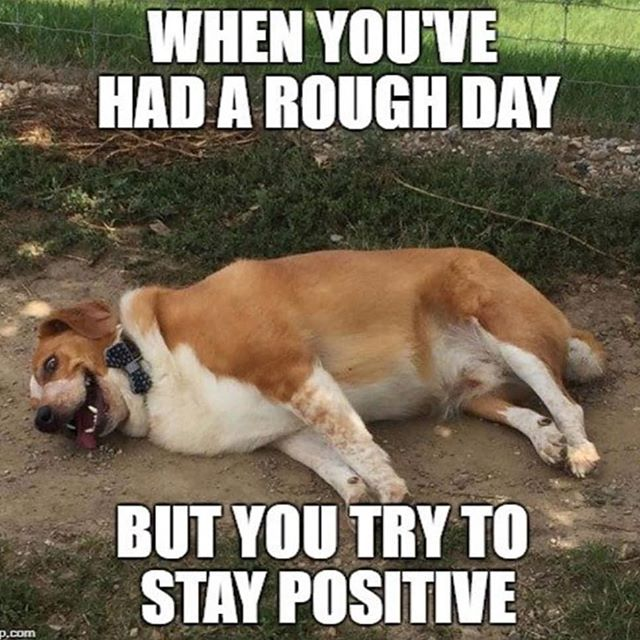 #dogsofinstagram #rough #positivevibes