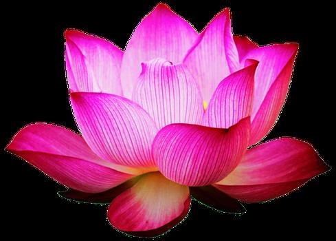 pink_lotus_by_jeanicebartzen27-db2l5kj.png