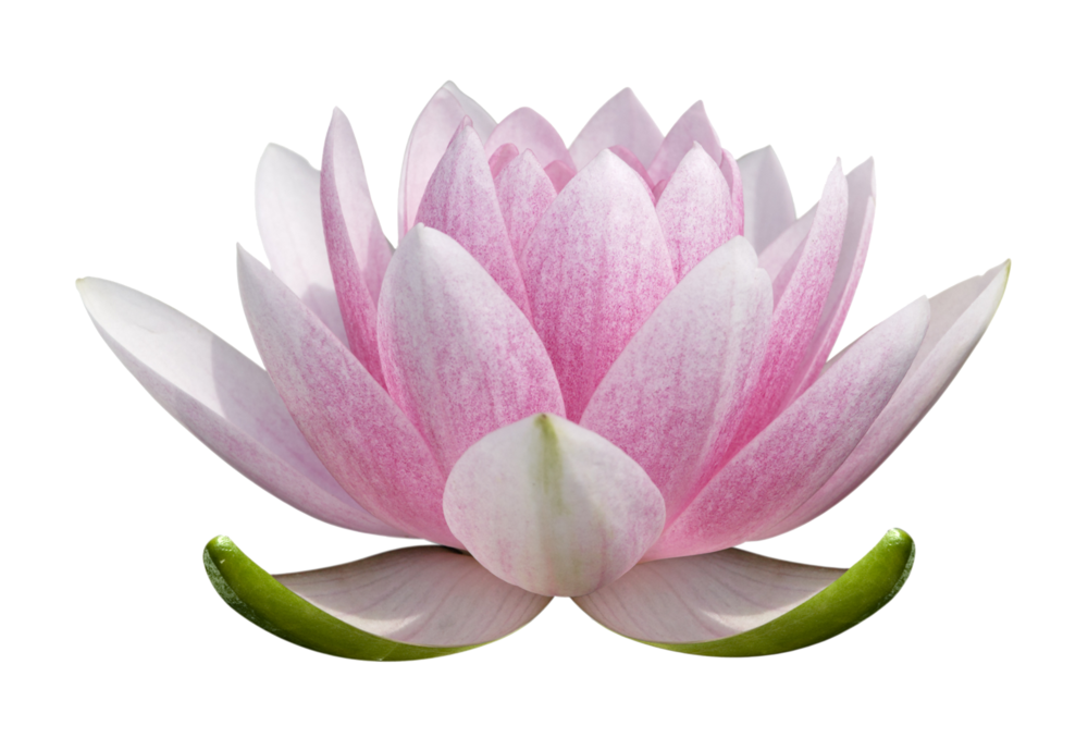 Lotus_for_logo.png