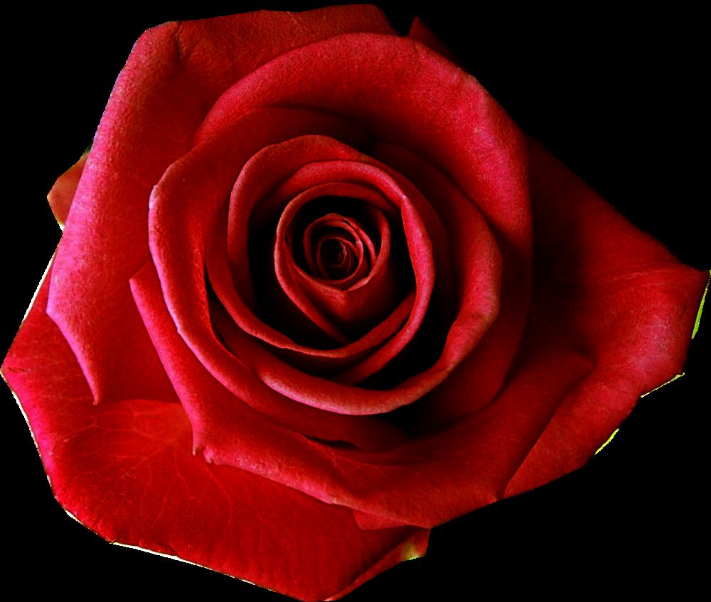 red-flower-clipart-flower-transparent-background-18.png