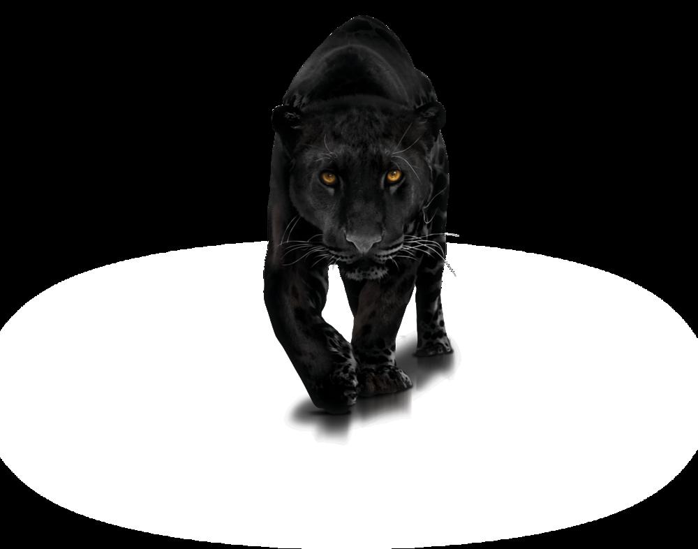 ... Black Jaguar of Fierce unconditional LOVE..