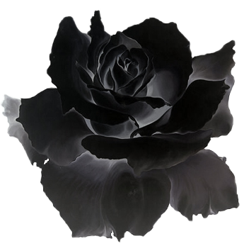 black rose.png