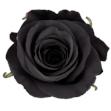 black-rose-2-1.jpg