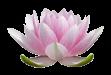Lotus_for_logo.png