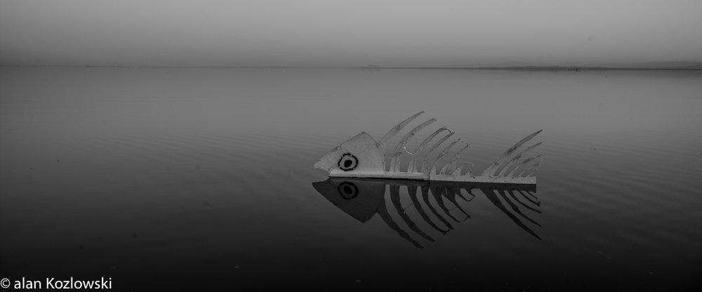 Bombay Beach Biennale-124.jpg