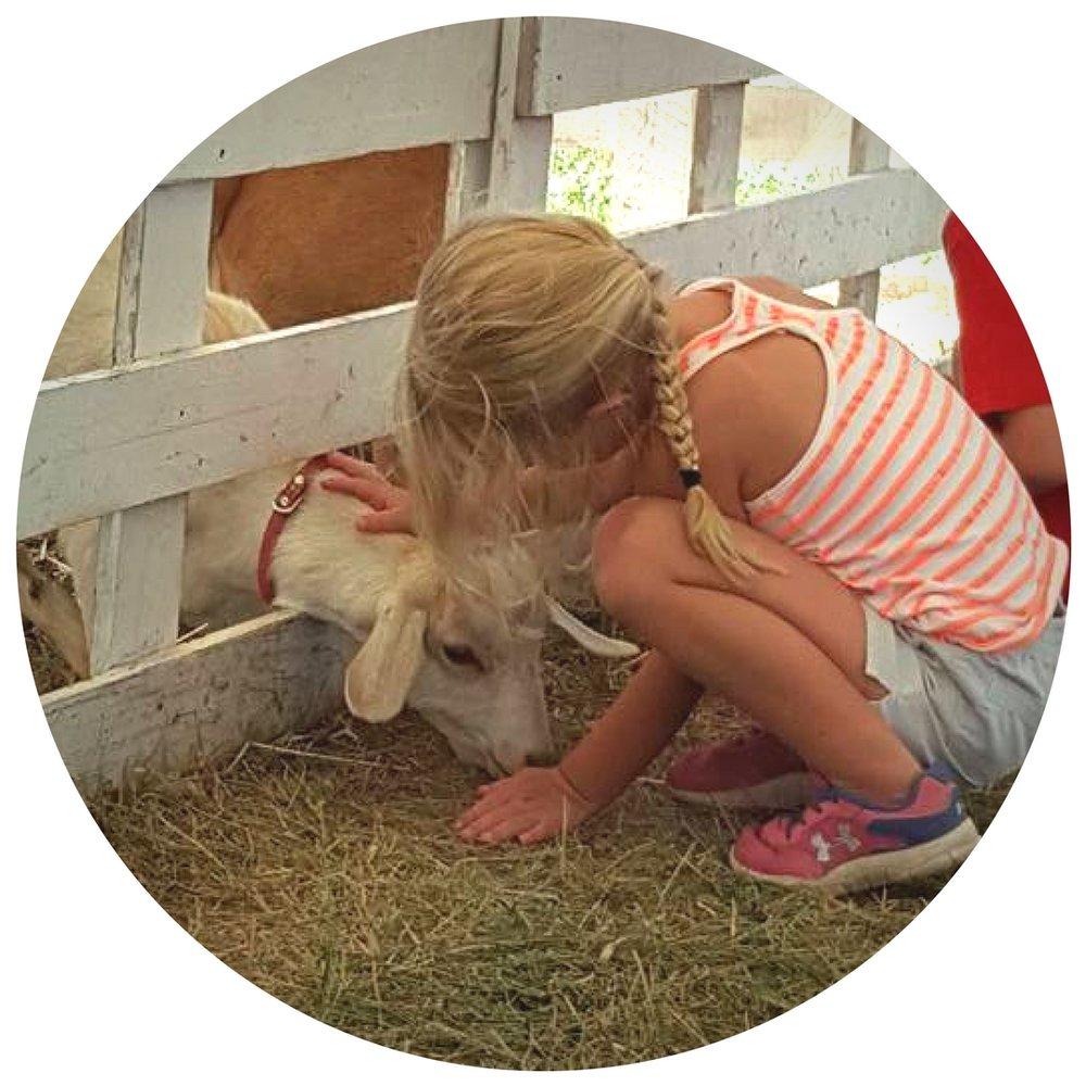 petting zoo (1).jpg