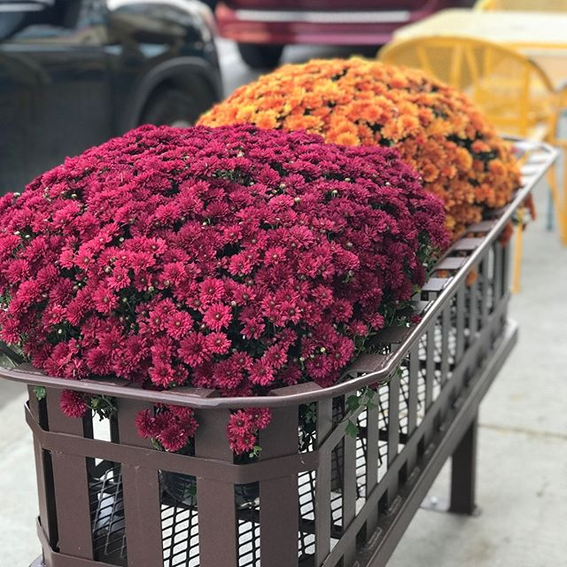 We're in love with these new planters donated to downtown Hannibal! 😍🍂 Thanks to Scott Haycraft, Continental Cement, Salt River Master Gardeners, Larry & Detsyl Welch, and Green America for your generous donation.  #historichannibal #visithannibal #hannibalmo #high5hannibal #quincyil #missouriadventure  #visitmo #marktwain #showmestate #mo #explore #showme #supportlocal #community #shoplocal #lovehannibal
