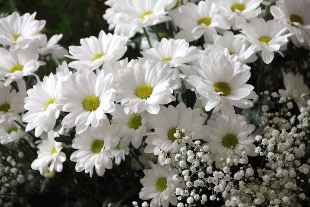 bloom-blossom-close-up-64736.jpg