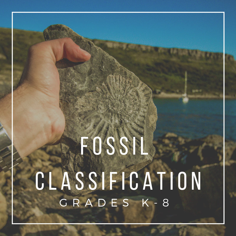 Fossil Classification.png