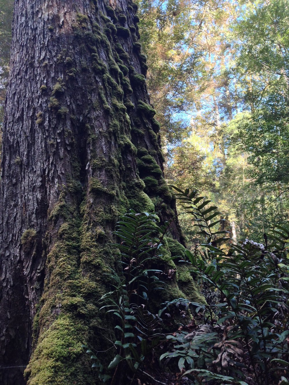 Temperate rainforest of the Tarkine (one of four full-day sightseeing excursions included in the tour).