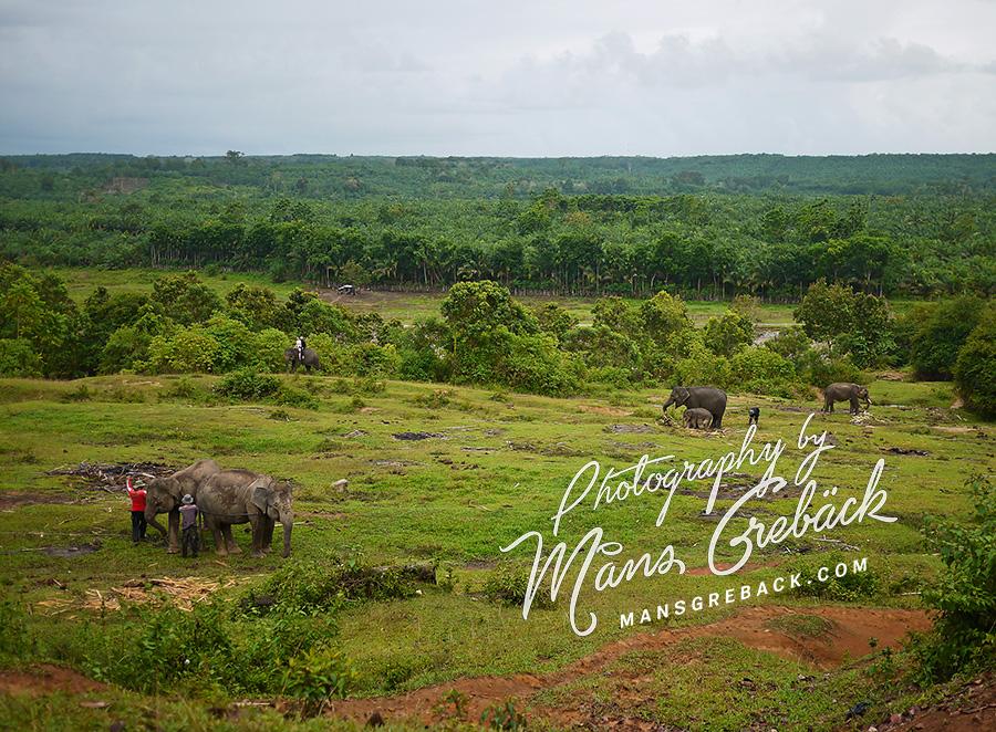Elephants Field