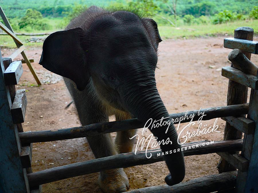 Baby Elephant Fence